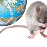 Крыска и Земля
