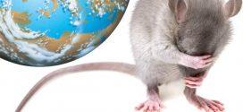 Задачка про крыску и верёвку вокруг Земли